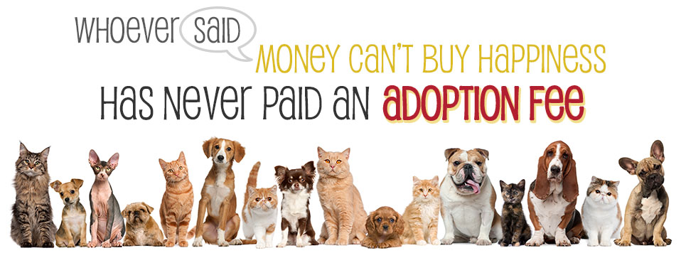 Pet Haven Dogs For Adoption